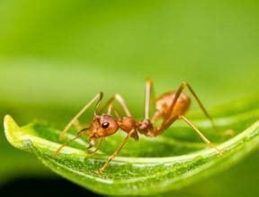 was tun bei ameisen in der wohnung was hilft gegen ameisen in der wohnung tipps und infos hier