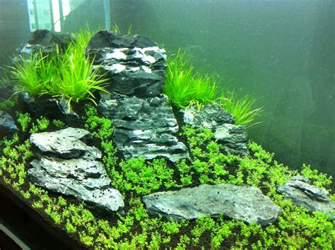 aquascape forum my first iwagumi aquascape journal
