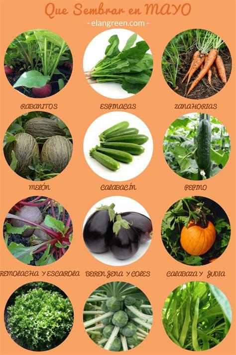 que plantar en casa descubre que hortalizas sembrar en mayo blog elangreen
