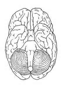 brain coloring page brain anatomy coloring pages az coloring pages