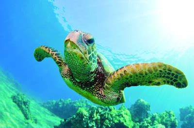 waikiki catamaran snorkeling excursion best snorkeling in oahu