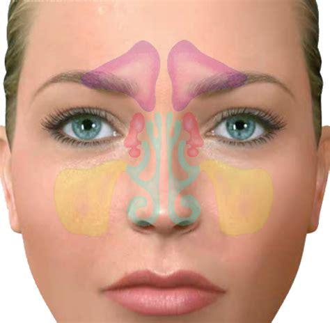 fotos de senos hermosos senos frontales related keywords senos frontales long