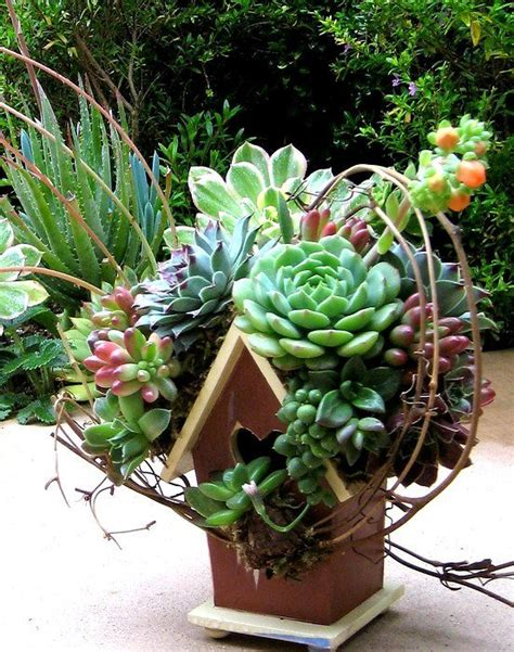 succulents container gardens the succulent container gardens flora