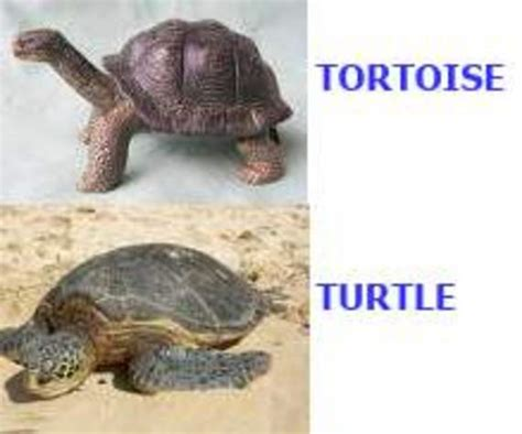 the tuttle and the search for atlas books tortoise versus turtle fascinating animals
