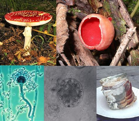 Pictures Of Fungi
