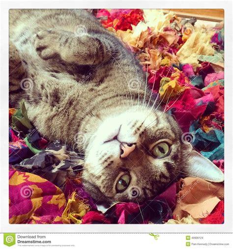 cat on rug cat on rag rug stock photo image 49906124