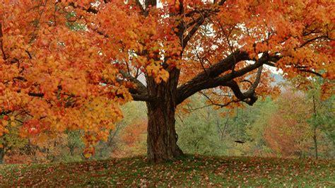 autumn trees wallpaper 751311