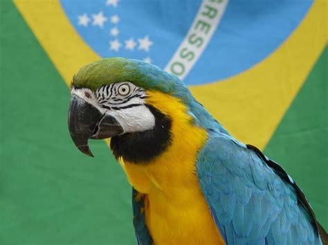 brasilianische hängematten wisst ihr woher die brasilianische flagge ihre farben