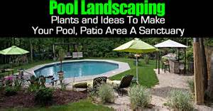 Pool landscape plants and ideas to make your pool patio