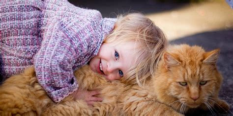 cat child cats could be affecting your child s reading and memory