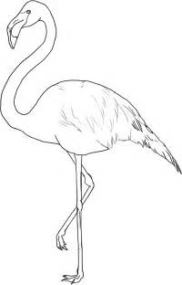 flamingo color flamingos coloring pages to