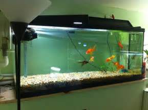 Cool Fish Tank In Reception Pictures to pin on Pinterest