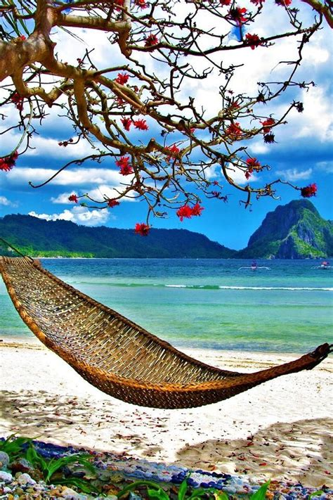 Hammock In Paradise just a hammock in a tropical paradise nature and travel