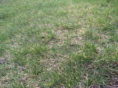 Rasen Vertikutieren Wann by Vertikutieren Aber Richtig