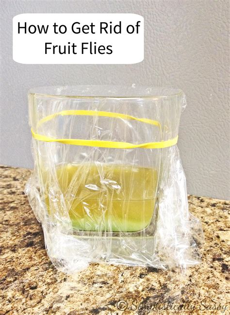 How To Get Rid Of Flies In The House by How To Get Rid Of Fruit Flies Fast Vinegar