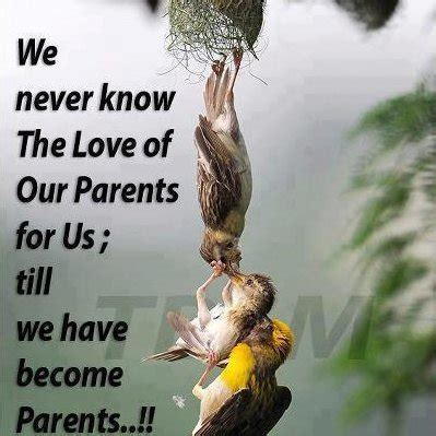 images of love of parents i love my parents quotes parents quotes quotes