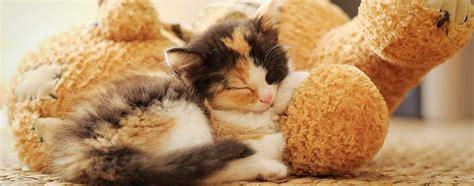 katzen in der wohnung halten d 252 rfen katzen in der wohnung alleine gehalten werden