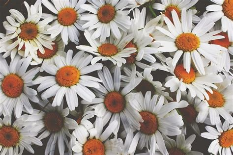 imagenes de flores we heart it pequeno pensar tumblr flores