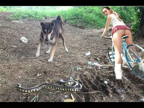 puppy vs real vs snake amazing attack snake vs snake real fight vs