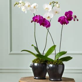 Домашние цветы фото названия и болезни