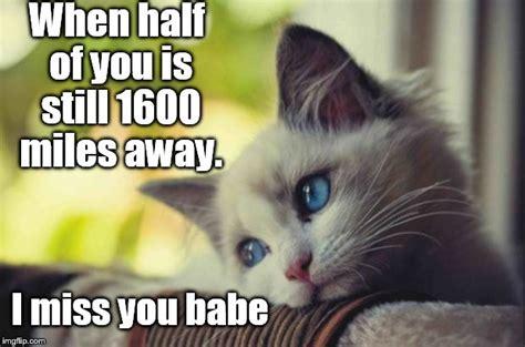 Sad Cat Meme - sad cat meme www pixshark com images galleries with a