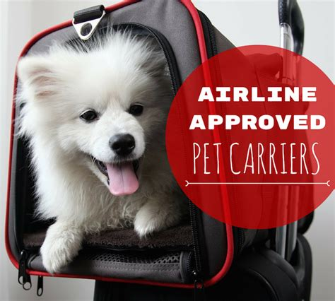 Pet Carriers Airline Approved In Cabin by 8 Best Airline Approved Pet Carriers For In Cabin Flights Pets Happy And Pandora