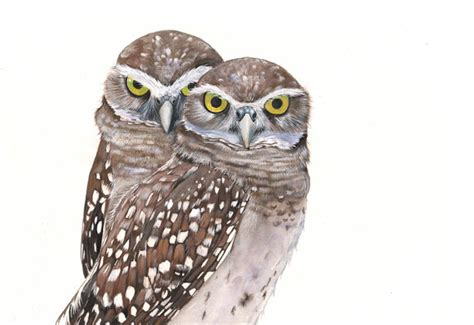 burrowing owl printable pictures burrowing owl watercolor and gouache painting print of