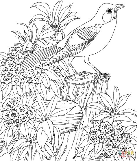 coloring pages of birds and flowers american robin and mountain laurel connecticut state bird