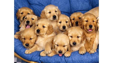 puppy family family 4k wallpaper free 4k wallpaper