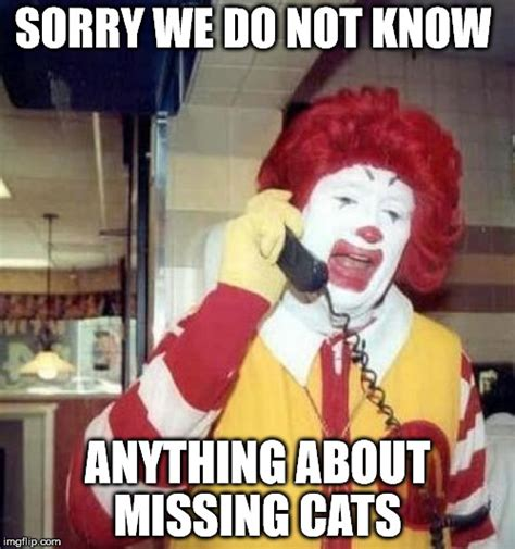 Missing Cat Meme - missing cats imgflip
