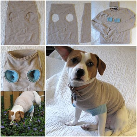3d Home Decor by Diy Upcycle Old Sweater Into Cute Pet Clothes