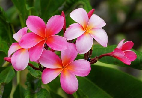 Hawaiian Flowers by 6 Iconic Tropical Flowers That Will Make You Think Of