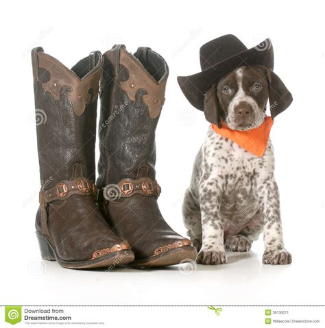 country puppies country stock image image 36130011
