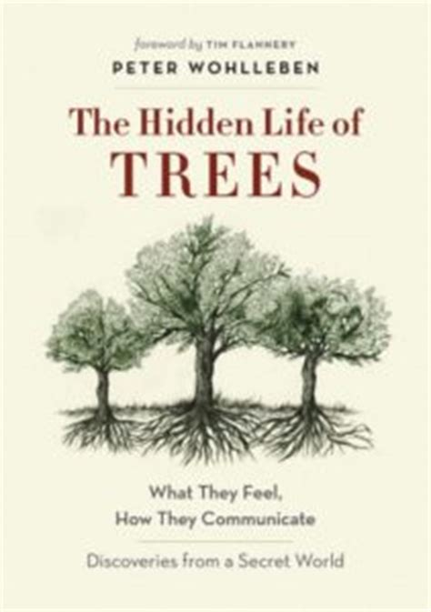 like trees books transcend media service 187 the secret of trees the