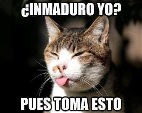 Imagenes Comicas Sacando La Lengua | las mas bonitas fotos tiernas de gatitos cari 241 osos fotos