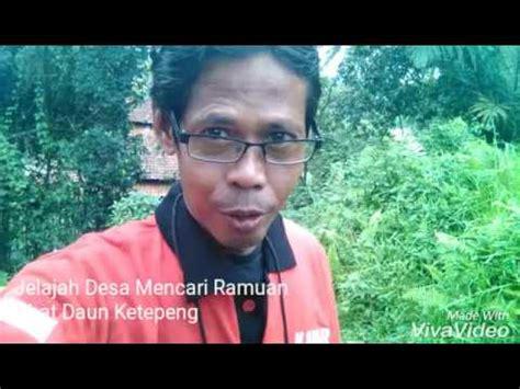 Kapsul Cacing Latif Herbalindo jual kapsul cacing latif herbalindo obat