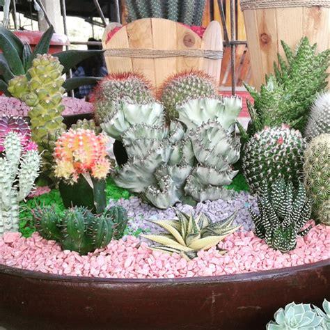 jual mini garden kaktus  sukulen  lapak
