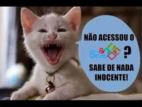 imagenes de gatitos inteligentes piadas do gato youtube