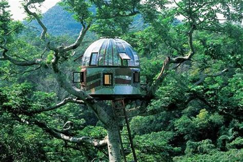 coolest treehouses 11 of the coolest treehouses