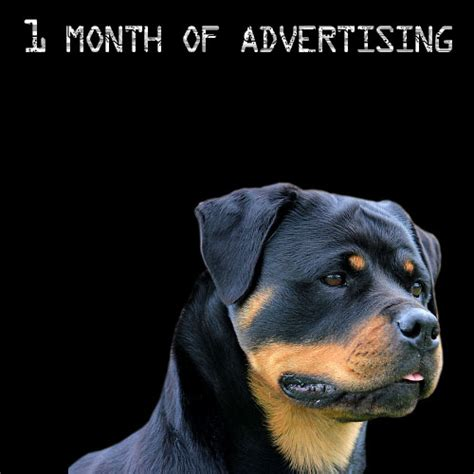 rottweiler 1 month rottweiler advertising