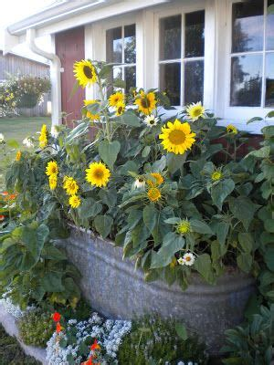 Sunflower Garden Ideas 335 Best Images About Garden Anything Can Be A Planter On Pinterest Gardens Container
