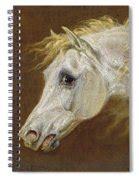 Head Of A Grey Arabian Horse Painting By Martin Theodore Ward