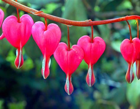 imagenes flores en forma de corazon imagenes ethel imagenes de flores mas hermosas y raras