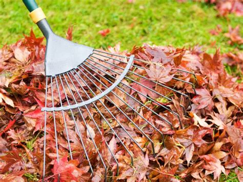 Landscape Rake Leaves Tag Archive For Quot Leaf Piles Quot Mr Grass