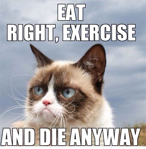 Cat Gym Meme - 29 best grumpy cat images on pinterest jokes animal