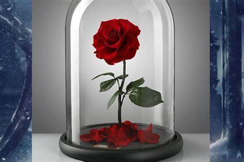 la e la bestia rosa la rosa incantata de la e la bestia esiste davvero