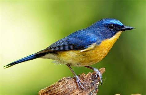 70 gambar burung dari berbagai negara termasuk indonesia satu jam