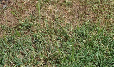 Erst Rasen Mähen Dann Vertikutieren by Rasen Richtig Vertikutieren 1000 Ideas About