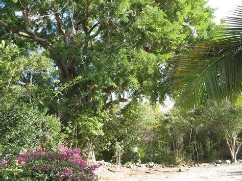caneel trailside cottage st john villa rental wheretostay