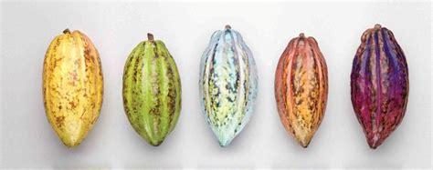 produttori lade какао бобы